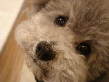 『愛犬フォトコンテスト』